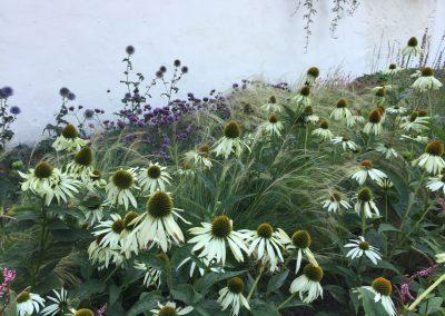 Bijenvriendelijke beplanting met zonnehoed (Echinacea), Persicaria, Kogeldistel, Verbena - In Bloom