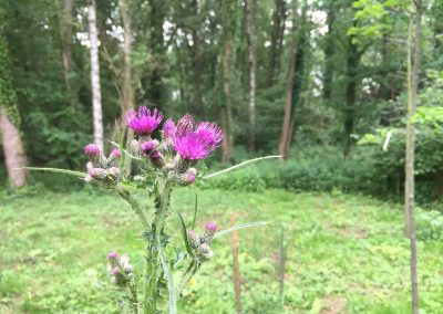 Bostuin met distel - In Bloom