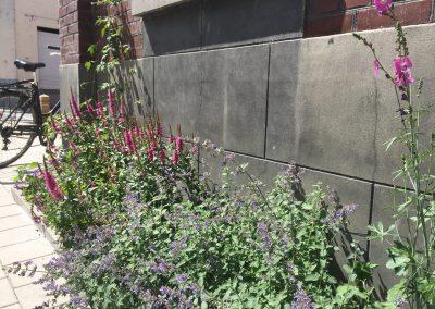 Geveltuin met Lavatera, Nepeta (Kattenkruid), Kattenstaart (Lythrum salicaria) en ooievaarsbek (Geranium)