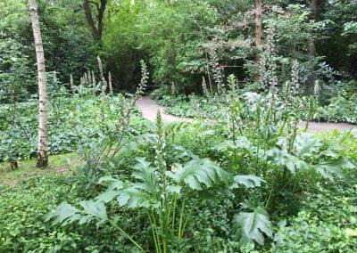 Gulbenkian - bosbeplanting - Acanthus