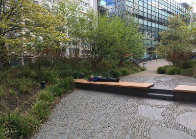 Leistenen verharding en meerstammige bomen - natuurlijke onderbegreoiing met zegge - Parijs - In Bloom