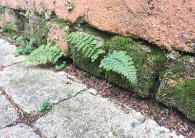 Muurbegroeiing - verticaal groen - In Bloom
