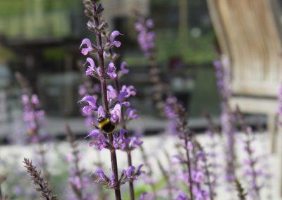 Patiotuin - vlinderplanten - bijenplanten - ecologische tuin - In Bloom