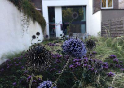 Stadstuin met kogeldistel - bijen vriendelijke tuin - In Bloom