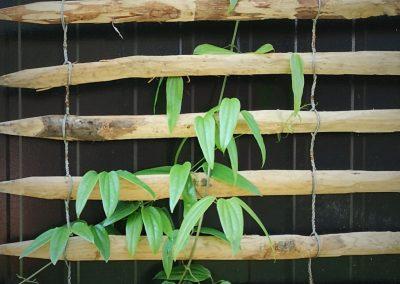 Een logge metalen loods omtoveren tot tuintroef kan best, met een originele klimsteun en de juiste klimplanten.