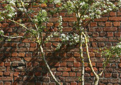 Meerstammige kleine bomen zijn instant sfeer brengers. Zoals deze karaktervolle meidoorn, hier volop in bloei! Dit boompje is niet alleen een favoriet bij bijen, de bessen die later volgen zijn een festijn voor vogels. Bovendien is een meidoorn 100% inheems: een topper voor de ecologische tuin!