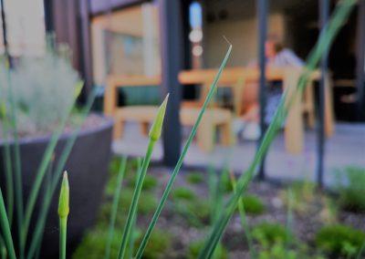 Daktuin met eetbare planten. Allium sphaerocephalon (hier nog in knop) doet het prima op dit dat. De bladeren en bloemen kunnen worden gebruikt als vervanger van bieslook in een salade of in een soep.