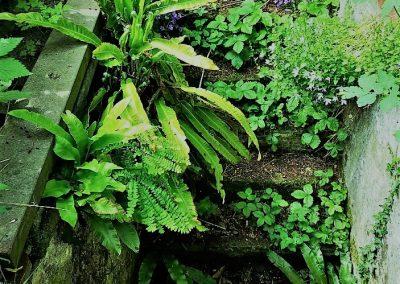 Een oud trapgat vol varens en schaduwplantjes is een prachtig mysterieus element!