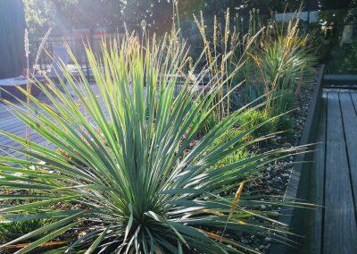 Een droogtetuin met een minimum aan substraat (om het gewicht te beperken). Beplanting met o.a. Yucca rostrata, sedum soorten, sierui en Koeleria. (In Bloom)