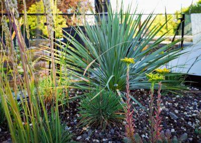 Een droogtetuin met een minimum aan substraat (om het gewicht te beperken). Beplanting met o.a. Yucca rostrata, sedum soorten en Koeleria. (In Bloom)