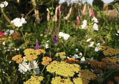 Bloemenzee: duizendblad, kaasjeskruid, ereprijs en op de achtergrond kattenstaarten - In Bloom