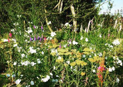 Naturalistische gezinstuin met klimboom en héél veel bloemen - In Bloom